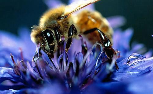 蜜蜂谐波跟踪雷达